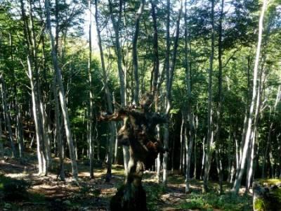 Hayedos Rioja Alavesa- Sierra Cantabria- Toloño;parque natural hayedo de tejera excursiones por la